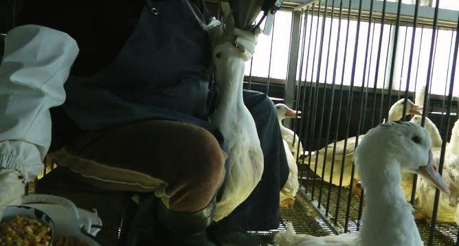 Fotograma extraído del reportaje del colectivo 'Igualdad Animal' sobre la granja Momotegi (Guipuzcua).