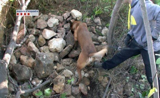 La unitat canina dels Mossos d'Esquadra ha localitzat a Montjuïc l'esquelet d'una dona desapareguda el juliol