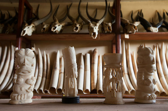 FOTOGALERIA: Figuras de marfil