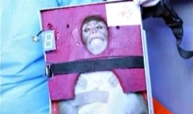 Captura de vídeo con el mono en la capsula del cohete