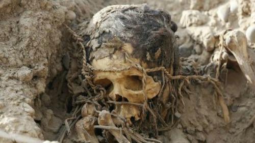 REUTERS.- Una de las momias encontradas en el centro deportivo de Lima