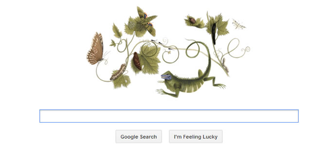 Maria Sibylla Merian, doodle de Google