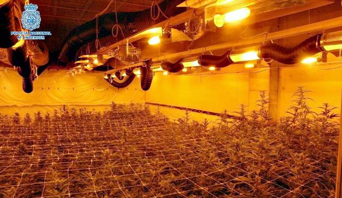 Imágenes de una de las plantaciones de marihuana