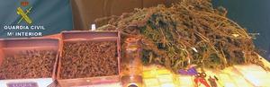 Marihuana para la tercera edad