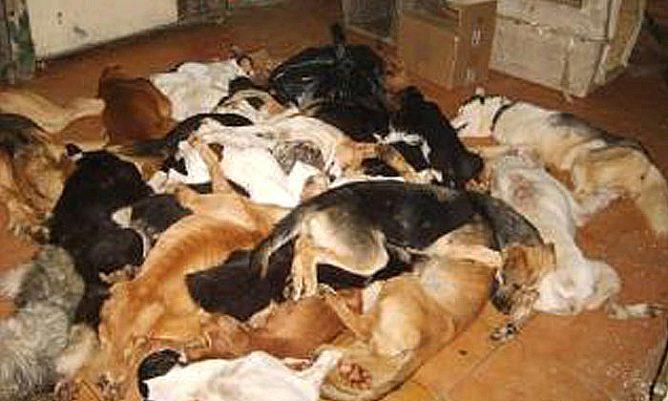 Un estudi altera dels problemes de salut pública que planteja el transtorn per acumulació d'animals, la síndrome de Noé