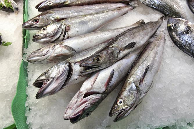 El colapso de los caladores en el Mediterráneo afecta ya a especies de alto valor comercial como la merluza