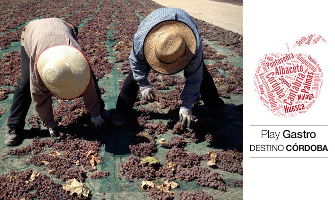 En la imagen, dos volteadoras giran racimos de uva Pedro Ximénez en las afueras de Montilla.