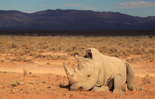 Rinoceronte en la reserva privada French Damien Vergnaud, a 200 km. de Ciudad del Cabo.