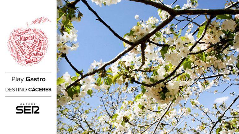 Cerezos en flor, en el Valle del Jerte.