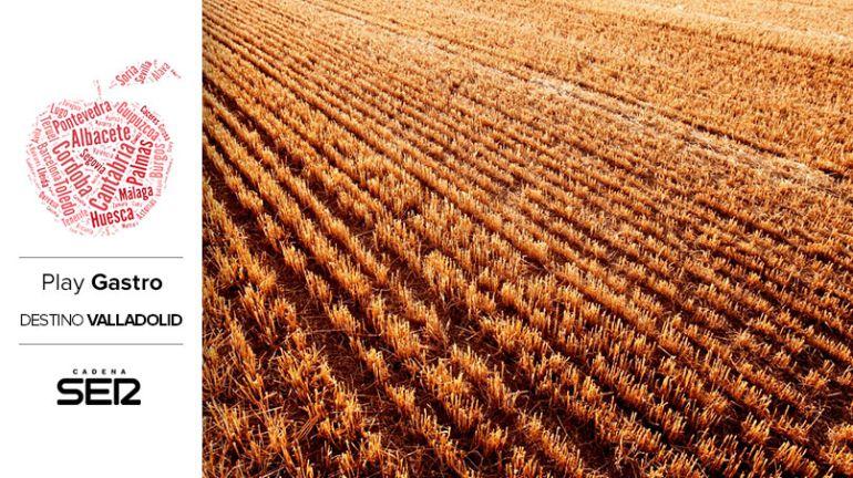 Campo de trigo en Valladolid.