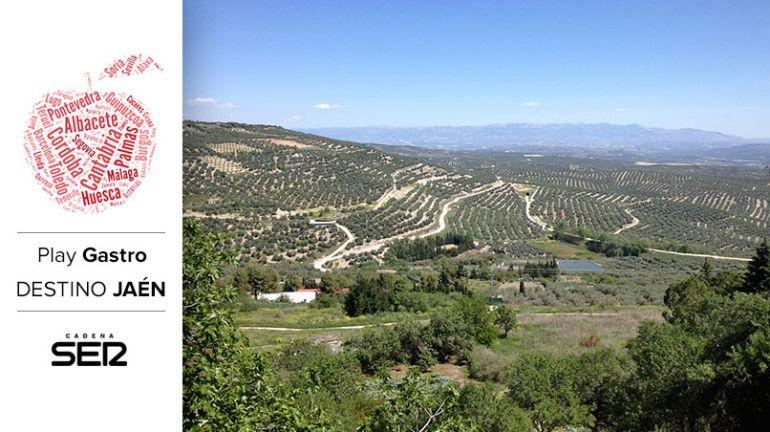 El mar de olivos visto desde Úbeda.