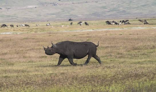 Rinoceronte en el Ngorongoro-Paco Nadal