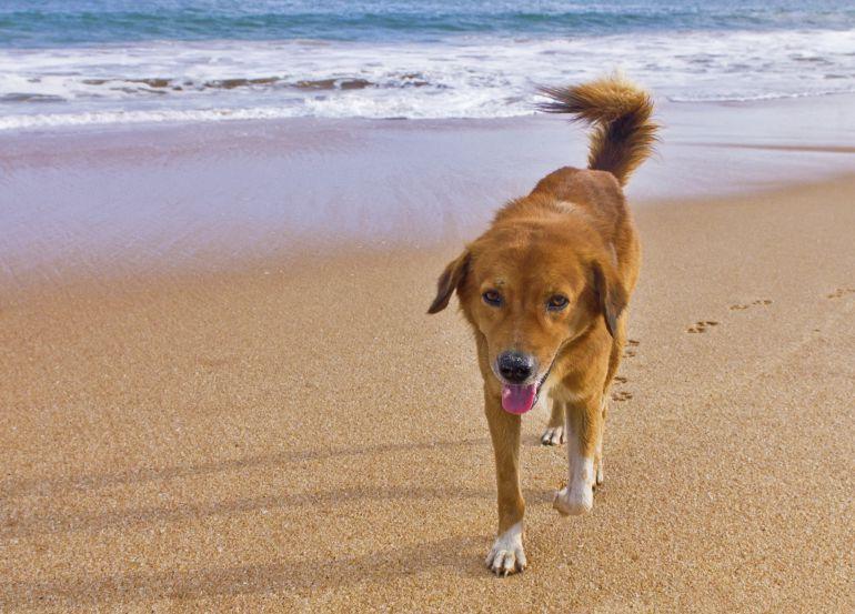 Las playas para perros en julio