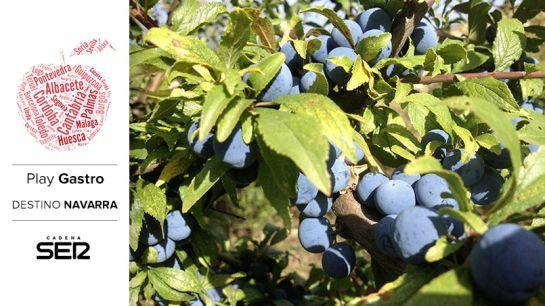 La elaboración del pacharán arranca con la recolección de lo que en Navarra se conoce como arañones: el fruto de los endrinos