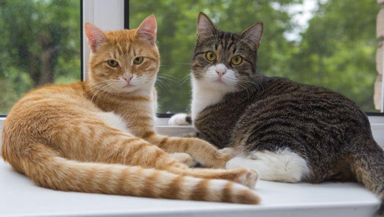 40 datos de gatos