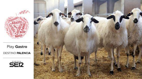 Las ovejas churras nos han dicho que están deseando verte.