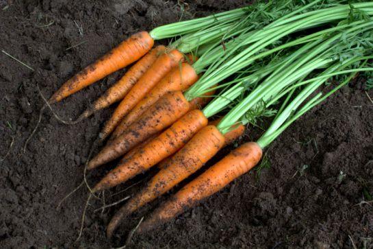 ¿Cuánto hace que no comes zanahorias?