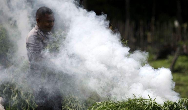 Un policía quema plantas de marihuana en una plantación ilegal.