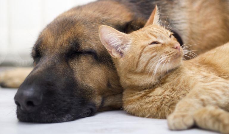 Los perros y gatos son los principales damnificados.