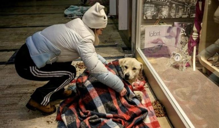 Una de las voluntarias ayudando a un perro.
