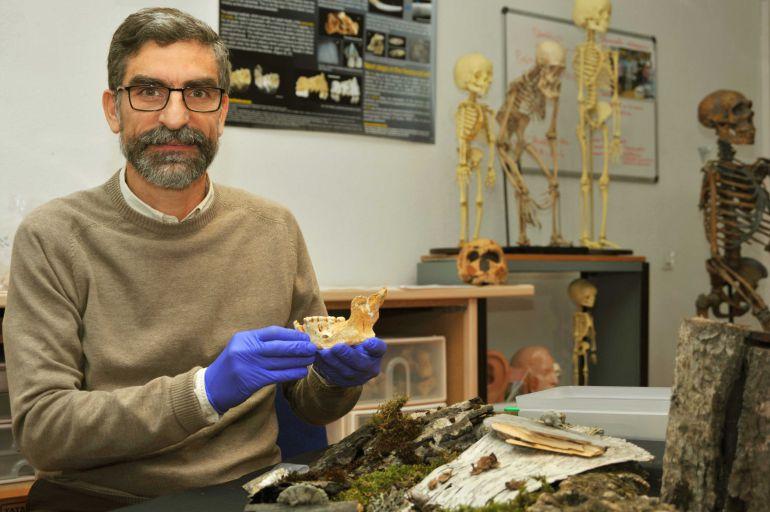 El investigador del CSIC Antonio Rosas con la mandíbula neandertal encontrada en la cueva del Sidrón (Asturias).
