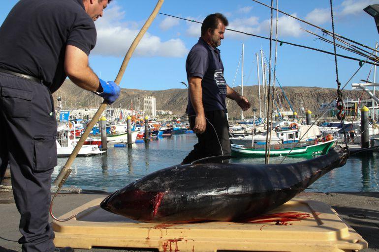 Pescadores en el puerto de Los Cristianos, en las islas Canarias, donde ha llegado Gambierdiscus, la toxina que provoca la ciguatera.