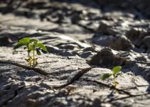 Encuentran evidencias de que la vida comenzó en tierra firme y no en el mar