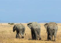 Muere un turista español arrollado por un elefante en un parque natural de Etiopía