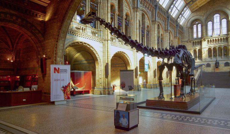 Réplica del esqueleto del Diplodocus en el Salón Central del Museo de Historia Natural de Londres.
