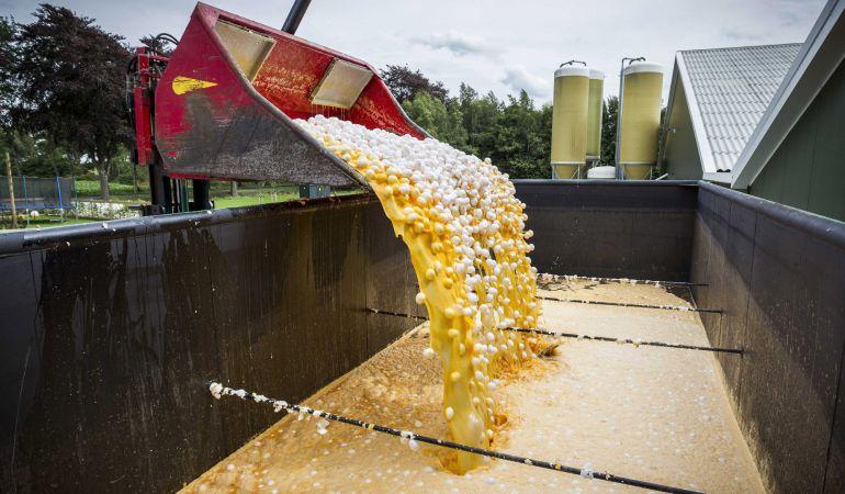 Vista de una máquina que transporta los huevos contaminados para desecharlos en una granja avícola de Onstwedde (Holanda).