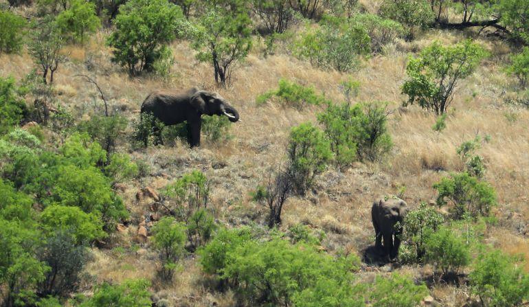 Dos elefantes en África.