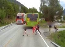 Los reflejos de un camionero salvan la vida a un niño que cruzó temerariamente