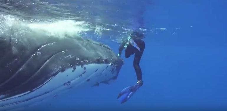 Imagen del momento en el que la ballena intenta mantener a la buceadora en la superficie