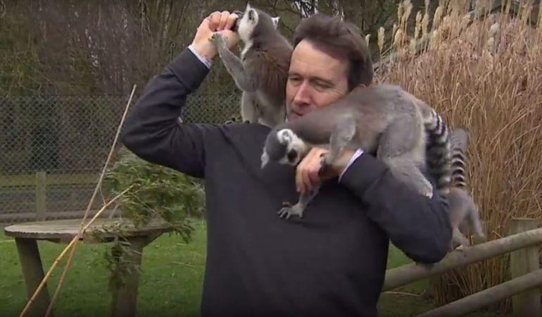 Fotograma del vídeo donde se muestra a los lémures atacando al reportero.