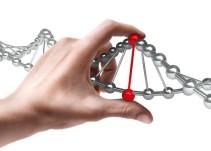 Descubren que la forma del genoma determina la función de las células