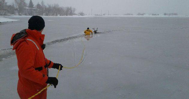 El equipo rescatando al animal.