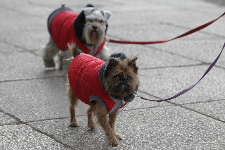 Una persona pasea por la calle con sus dos perros.