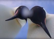 La hilarante reacción de un grupo de pingüinos al encontrarse con una cámara