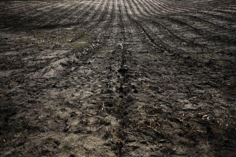 Áreas de labores de reforestación en Leiria.