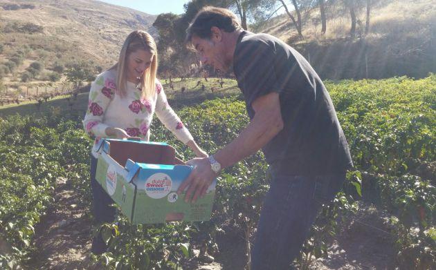 Carlos y Cristina en plena recolección de chiles en los cultivos.