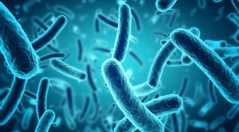 Resultado de imagen para imagenes de superbacterias