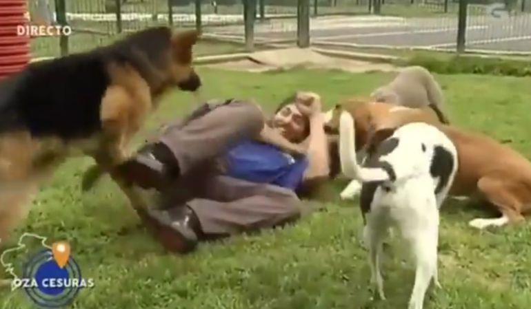 Los perros rodean al cuidador.