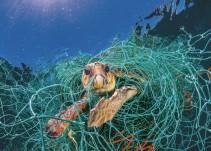 Los efectos del uso abusivo del plástico y la iniciativa para frenarlo
