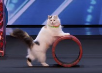 El entrañable e impactante espectáculo de los gatos acróbatas