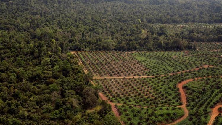 El aceite de palma está acabando con 193 especies de animales amenzados