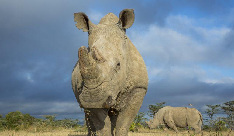 Sudán fallecía el pasado mes de marzo, poniendo a su especie al borde de la extinción.