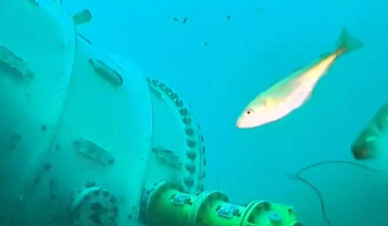 Ya puedes disfrutar del fondo marino en directo de la mano de Microsoft