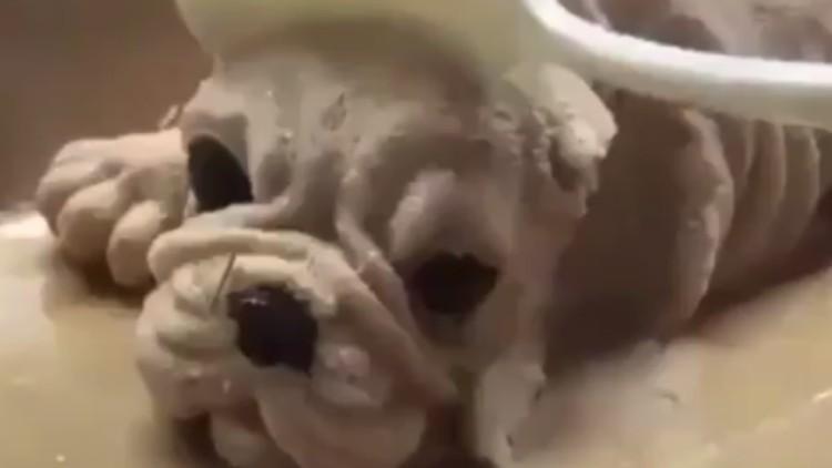 Un perro y una cuchara: el inquietante vídeo que triunfa en las redes