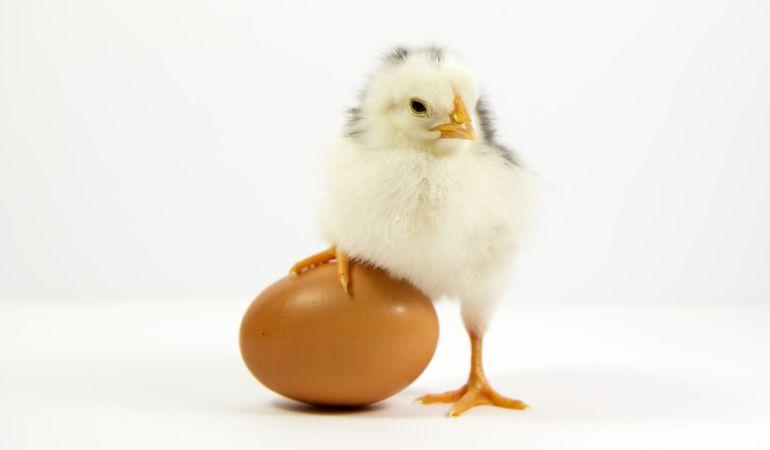 ¿Qué fue antes, el huevo o la gallina? La física cuántica responde a la pregunta
