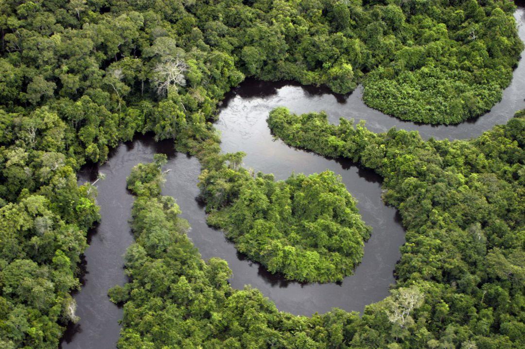 Investigadores descubren que una planta del Amazonas mata células cancerígenas humanas